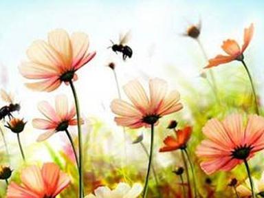 ПВХ фартук Пчелки 3000х600х1,3мм