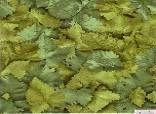 Пленка с/к 0,45м*8м 8257 D&B листья