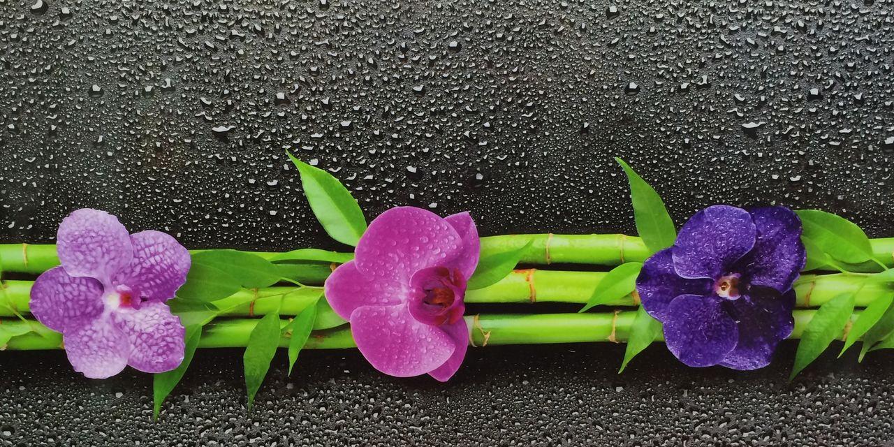 ПВХ панель  2700х250х7  Орхидея 351