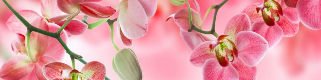 МДФ фартук  Орхидея №3   2440х610х3 мм
