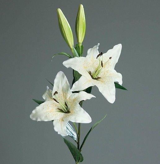 Ветка лилии