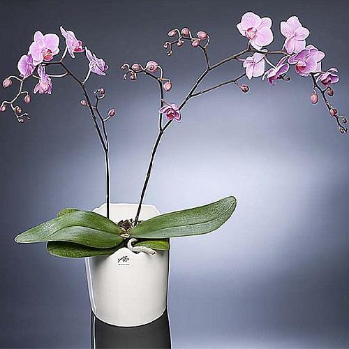 Кашпо для Орхидей d13,5см пластик(антрацит)